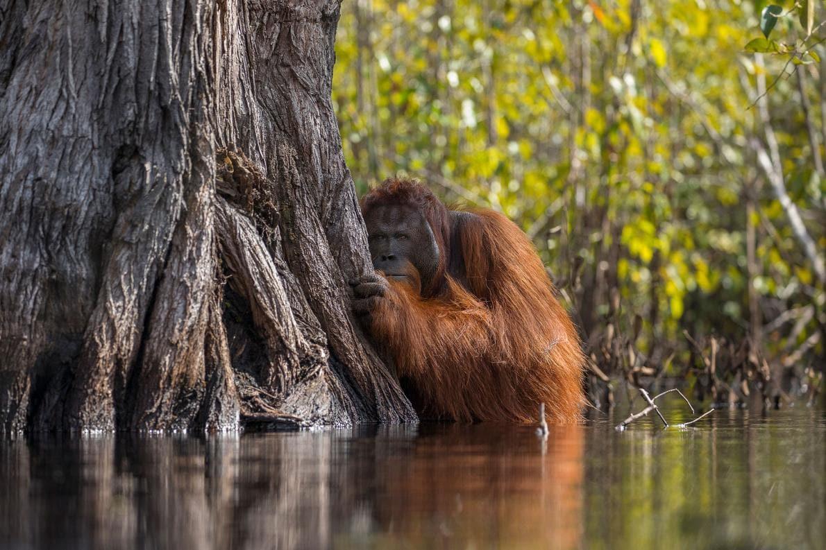 découvrez quels sont les problèmes causés par l'huile de palme.