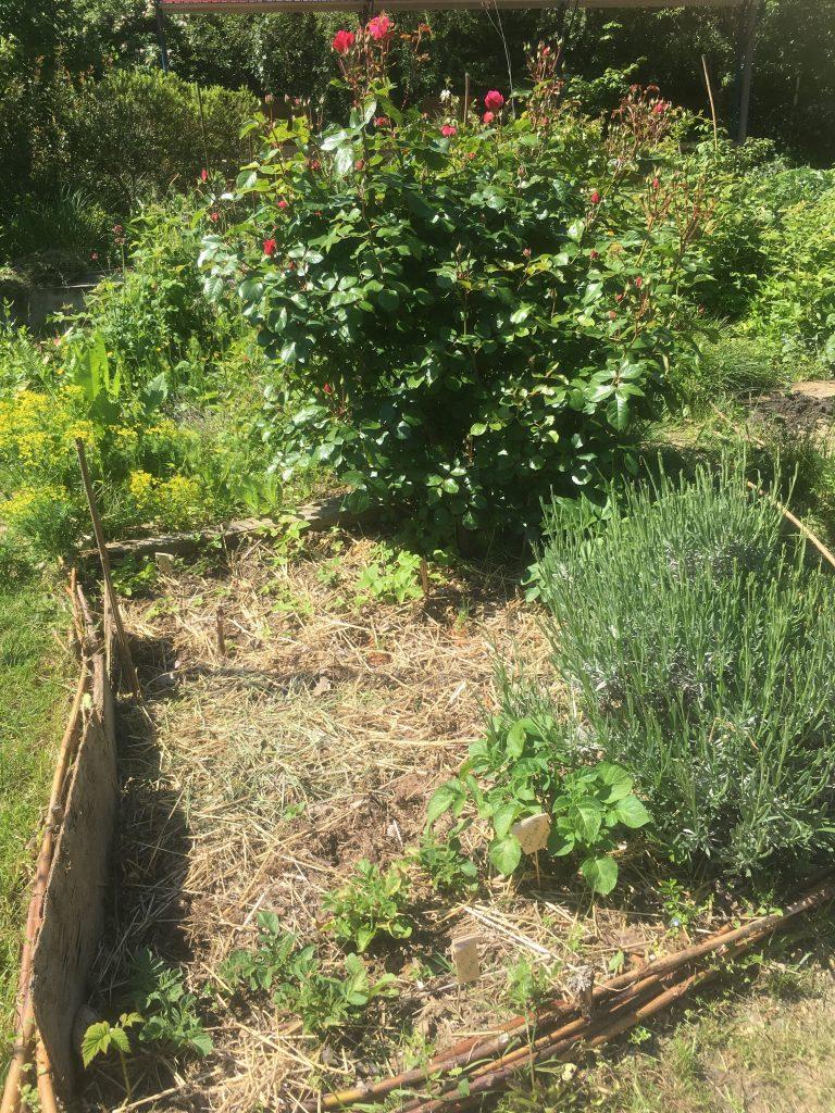 paillage-en-permaculture