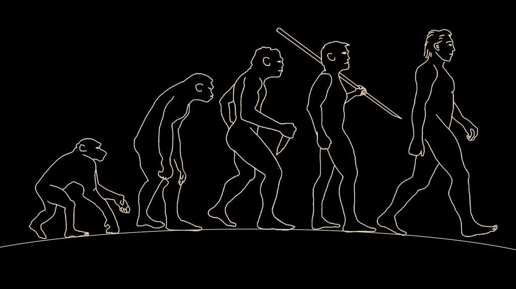 L'évolution de l'Homme.